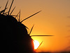 sunrise (_tess_) Tags: marokko المغربalmaghrib tess marrakech cactus sunrise