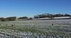 Daresbury Village (joanjbberry) Tags: daresbury rural field sheep snow trees landscape village