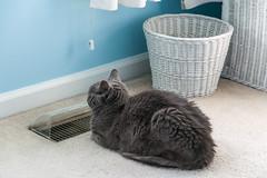 17-7820 (George Hamlin) Tags: virginia chantilly franklin glen cat bedroom house heat vent carpet waste basket trash photo decor george hamlin photography