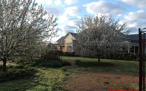 135 Nash Street, Parkes NSW 2870