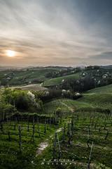 L_arrivo della primavera (A. C. Officina Fotografica) Tags: sunset piemonte italia vigneti primavera vino alberi paesaggio landscape ngc