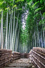 Bamboo fairy tale (Channed) Tags: adashinobamboogrove arishiyama asia azië japan kioto kyoto bamboo foret forest wood path nature tree stairs channedimages chantalnederstigt