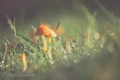 Day 223: Tiny Mushrooms