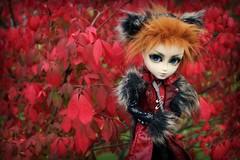 Fall (CornflowerBlue07) Tags: groove taeyang valko