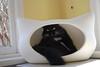 Batcave (rootcrop54) Tags: batman male longhair longhaired tuxedo batcave whiskascatheadbed whiskas sunny table window neko macska kedi 猫 kočka kissa γάτα köttur kucing gatto 고양이 kaķis katė katt katze katzen kot кошка mačka gatos maček kitteh chat ネコ crepemyrtle crapemyrtle bark