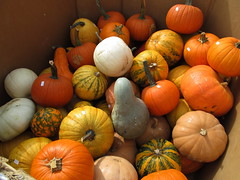 Gourds And Pumpkins. (dccradio) Tags: smithsburg md maryland ivyhillfarm farmstore orchardstore ag agricultural agriculture produce harvest autumn fall gourds gourd pumpkins pumpkin canon powershot a3400is