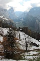 Winterlandschaft bei Wengen in den Berner Alpen - Alps im Berner Oberland im Kanton Bern der Schweiz (chrchr_75) Tags: christoph hurni schweiz suisse switzerland svizzera suissa swiss chrchr chrchr75 chrigu chriguhurni chriguhurnibluemailch november2017 november 2017 albumzzz201711november wintereinbruch schnee snow neige albumregionthunhochformat thunhochformat hochformat kantonbern kanton bern