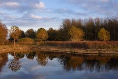 DSC_8553-a (Julysha) Tags: november autumn pond reflection nature twiske noordholland thenetherlands 2017 evening acr d7200 sigma241054art