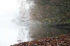 IMG_9698 (HAKANU) Tags: sweden småland kronoberg ör autumn fall cloudy cloud mist misty nature svanebro lake water glittering beach leaf