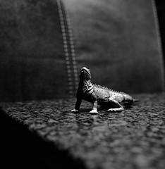 Alien (Rosenthal Photography) Tags: treu ff120 bnw schwarzweiss anderlingen spielzeug asa400 familie mittelformat spiel ilfordxp2 städte echse bw rolleiflex35f 20171008 analog 6x6 dörfer siedlungen alien dark darkness indoor rollei rolleiflex rollinar 35f sk schneiderkreuznach 75mm xenotar mediumformat mood ilford xp2 blackandwhite