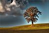 The tree in the autumn (Ostseetroll) Tags: deu deutschland geo:lat=5418554515 geo:lon=1062307819 geotagged kirchnüchel schleswigholstein sielbeck herbst autumn baum tree wolken clouds