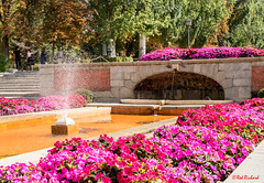 Parque del Buen Retiro Madrid (red.richard) Tags: parque del buen retiro madrid fountain water flowers