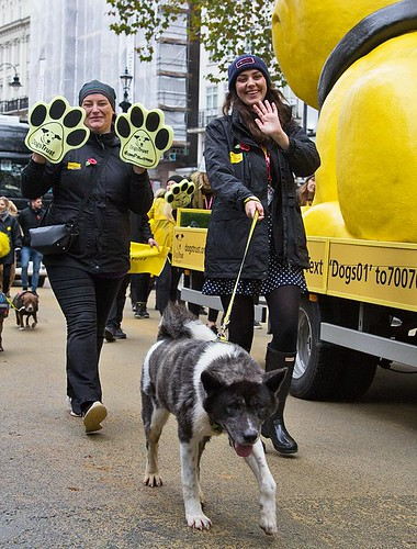 Dogs Trust, Lord Mayor's Show, London, 11 Nov 2017