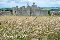 Up close on tall grasses in field in front of Middleham Castle, Wensleydale, in the county of North Yorkshire, England. (Remsberg Photos) Tags: england yorkshire wheat grain grass tallgrasses middlehamcastle historic oldruin wensleydale ancient architecture builtstructure deterioration famousplaces tourism uk traveldestinations history stone castle medieval nopeople colorimage middleham upclose selectivefocus ruins unitedkingdom