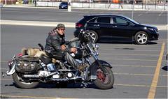 Biker (Hindrik S) Tags: biker motorbike bike motor motorfiets man harleydavidson streetphoto strjitfotografy street strjitte straat streetphotography parking waiting candid sony 2017 canada kanada leather helmet