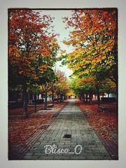 Caminos de Otoño... (Blisco_O) Tags: bliscoo otoño caminos art valladolid españa spain cyl xiaomiredminote4 2017 xiaomi colors