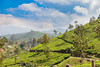 Munnar, India (Ðariusz) Tags: amazing journey south india exploring wonderful tea plantations phtoos photos photographer teas drink easy cheap grass forest landscape animal tree sky elephants metoo field wood people munnar