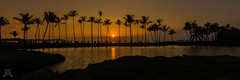 A-Bay Sunset-0884-3 (NWPaddler) Tags: 2017 abay bigisland fall hi hawaii kona nikon pacificocean palmtrees sunset landscape silhouette sunsetsandsunrisesgold