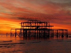 DSCN4849 (loolabub) Tags: murmuration brighton beach sunset southcoast brightonpier starlings seabirds
