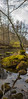 DSC_4220-Pano (joacim_771) Tags: boxholm höst natur vatten water autumn nature rock moss mossa sten å river sweden sverige östergötland östra götaland