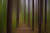 Bottom Brook Arboretum (barachois50) Tags: arboretum bottombrook forest trees motionblur westernnewfoundland newfoundlandandlabrador newfoundland