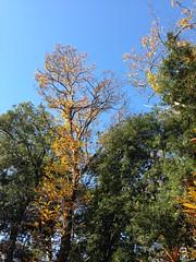 40 (emmess2) Tags: campiglia cinqueterre spezia autumn fall leaves