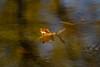 Little Boat (Bloui) Tags: 2017 botanicalgarden eos7d jardinbotanique marais october montréal québec leaf deadleaves water floating autumn fall reflections