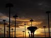 Atardecer perdido (John LaMotte) Tags: nubes nwn clouds cielo contraluz cáceres siluetas sky sunset cigüeña extremadura