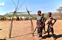 Ceremonial Gate (Rod Waddington) Tags: africa african afrique afrika äthiopien ethiopia ethiopian ethnic etiopia ethnicity ethiopie etiopian omo omovalley outdoor omoriver turmi hamer hamar traditional tribe tribal bull jumping ceremony sticks gate girl woman cattle landscape