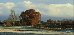 Frosty Morning. (Picture post.) Tags: frost winter fields oak trees shadows hedge clouds landscape nature green paysage arbre sunrise