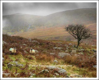 002A2504   Misty Morning Mahon Falls  Co Waterford