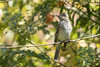 Fio Fio (Patricio_Alvarado) Tags: aves pajaros plumas sanpedrodelapaz chile biobio concepcion birdsofchile bird birds spring primavera fio fiofio