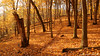 The Trail (David C. McCormack) Tags: eos6d environment hiking inspiration landscape midwest nature outdoor rural wisconsin