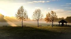 Treenity (Lux Aeterna - Eternal Light) Tags: