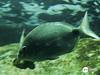 Aquario Santos (Carlos Shibata) Tags: aquario santos peixe fish water river underwater