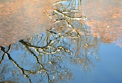 Reflections (KaDeWeGirl) Tags: newyorkcity bronx vancortlandt park winter reflection lake trees branches leaves ice frozen