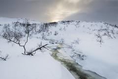 Djubevassbekkjen - D8G_1731 (Viggo Johansen) Tags: winter stream cold sky clouds landscape november trees vestagder norway