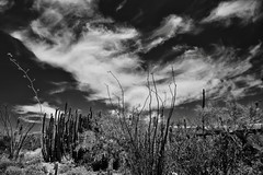 Majestic Wisps of Clouds Above the Arizona-Sonora Desert Museum (Black & White)