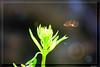 Dans un rayon de soleil (jacky.dartier) Tags: insecte plante