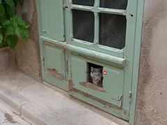 Marseillan (September Songs) Tags: marseillan france francja lhérault languedocroussillon langwedocja chat kot