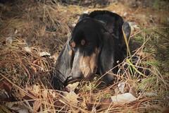 Nasco (bulbocode909) Tags: chiens nature suisse courantlucernois automne forêts montagnes feuilles vert