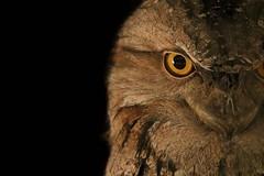 Hoo Hoo (MudMapImages) Tags: owl zoo hoot hoohoo