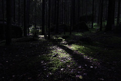 (Malykhanov) Tags: trip travel trees tree light landscape russia nature woods wood forest autumn ray atmosphere dark black