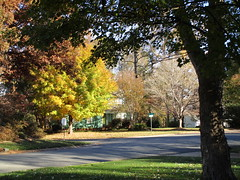 From our front door looking down the street. (snow41) Tags: landscape road trees color autumn neighborhood akob