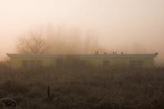 Trailer in the morning fog. (onepassenger) Tags: pentax ricoh k3ii sigma 1750mm f28 woodstock southern ontario empty abandoned forgotten urban explore exploration ue urbex trailer foggy fog moody pixelshift
