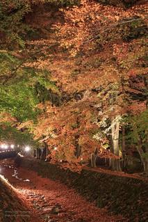 紅葉迴廊 Kawaguchiko, Japan