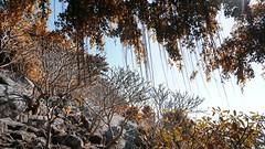 Summer time (Nghia_Lee_Huu) Tags: summer vietnam brown rock tree tay ninh ba den mountain