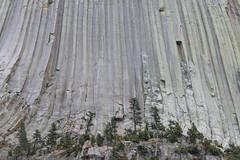 Wyoming, Devils Tower IMG_5502 (ianw1951) Tags: cenozoic columnarjointing devilstower geology phonolite usa wyoming