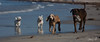 2017 - 11_25 - Animals - Dogs - Rat_Pack 03 (stevenlazar) Tags: beach ocean water australia dog outerharbor adelaide sand 2017 southaustralia waves