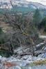 Haya solitaria · Lonely beech (see full screen) (easaphoto) Tags: ordesa parquenacional otoño haya beech